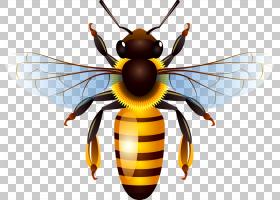 蜂蜜蜂蜜蜂,蜜蜂,大黄蜂PNG剪贴画昆虫,免版税,封装的PostScript,
