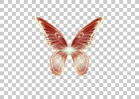蝴蝶翅羽,羽毛纸蝴蝶,幻想蝴蝶翅膀PNG剪贴画孔雀羽毛,昆虫,生日