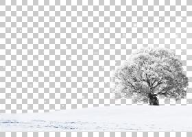 雪景,雪景设计PNG剪贴画白色,冬季,矩形,摄影,风景,电脑壁纸,单色