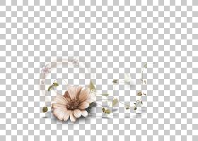 框架花卉绘图,花框架,白色花瓣PNG剪贴画框架,金色框架,文本,时尚