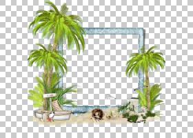 帧,里约PNG剪贴画杂项,摄影,公寓,其他,草,棕榈树,卡通,相框,花盆