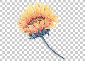 常见的向日葵水彩画,向日葵,向日葵PNG剪贴画插花,向日葵,人造花,