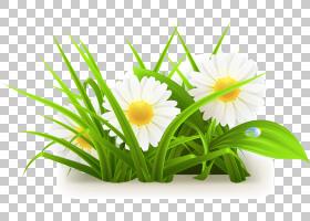 常见的雏菊,鲜花草草,白色雏菊PNG剪贴画插花,电脑壁纸,草,生日快