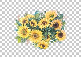 共同的向日葵水彩绘画例证,水彩花,黄色花例证PNG clipart水彩叶