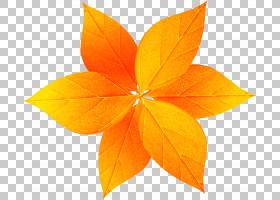 叶卡通,装饰PNG剪贴画杂项,叶,橙色,其他,对称性,卡通,luger手枪,