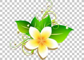 素馨花绘画,卡通蛋花材料,黄色鸡蛋花艺术PNG剪贴画水彩画,插花,