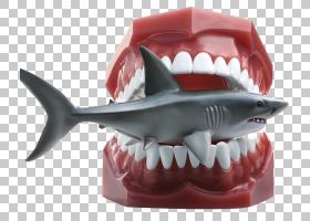 鲨鱼盖蒂的股票摄影,鲨鱼模型PNG剪贴画白色,动物,摄影,出版,新闻