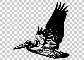 鹈鹕,鹈鹕PNG剪贴画杂项,其他脊椎动物,单色,动物,野生动物,卡通,