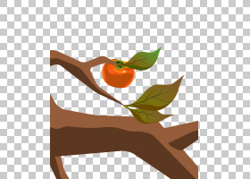 欧陆福井插图柿子PNG剪贴画食品,橙色,卡通,花卉,水果,柿子,水果