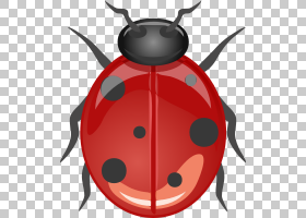 甲虫绘图,错误PNG剪贴画动物,昆虫,卡通,桌面壁纸,瓢虫,无脊椎动