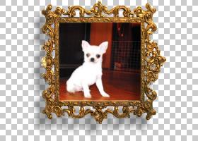 奇瓦瓦狗小狗品种框架玩具狗,小狗PNG clipart动物,食肉动物,玩具图片