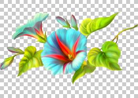 孔雀PNG剪贴画杂项,动物,摄影,人,花,数据,花瓣,孔雀,信息,217481图片