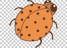 绘画艺术,甲虫PNG剪贴画食品,动物,摄影,橙色,royaltyfree,鼻子,图片