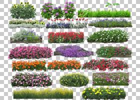 花,花干草堆,各种各样的花图PNG剪贴画摄影,草,生日快乐矢量图像,