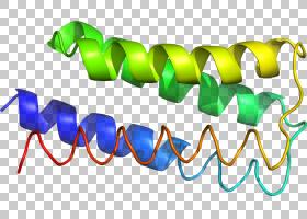 标志,设计PNG剪贴画文字,标志,24,蛋白质,线,l1,d1,艺术,区域,218