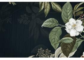 深色与热带植物叶子装饰背景素材