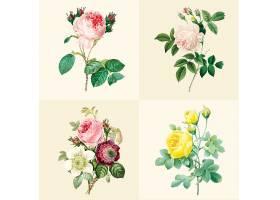 清新手绘多株植物叶子花卉特写素材