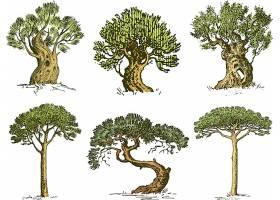 手绘多株不同形态的树木装饰插画设计