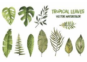 手绘多片不同形态的叶子装饰插画设计