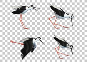 水鸟白鹳Wader,分享PNG剪贴画动物,动物群,鸟,deviantArt,羽毛,ch