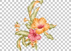 夏威夷芙蓉画笔绘画,孔雀,橙色和红色芙蓉PNG剪贴画水彩画,插花,