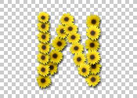 字母案例N字母桌面,向日葵PNG剪贴画向日葵,向日葵种子,花,鲜花,