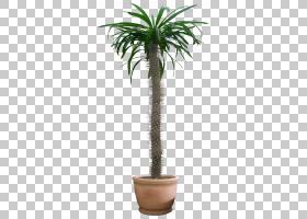室内植物树绿色,灌木丛PNG剪贴画棕榈树,植物茎,arecaceae,花,纹