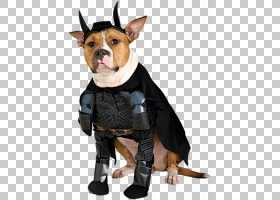 蝙蝠侠狗蝙蝠女万圣节服装狗PNG剪贴画动物,英雄,超级英雄,食肉动
