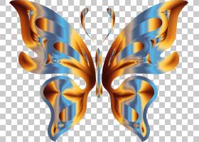 蝴蝶昆虫桌面蝴蝶PNG剪贴画对称性,昆虫,桌面壁纸,艾格莱斯Io,彩