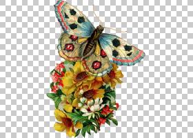 蝴蝶生日婚礼请柬,复古复古徽章,五彩的蝴蝶和各色花朵插图PNG剪