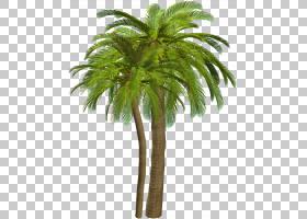 贝壳,海螺PNG剪贴画杂项,摄影,其他,棕榈树,植物茎,猕猴桃科,数字