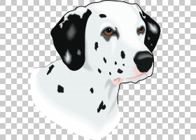 达尔马提亚狗幼犬哺乳动物,动物,食肉动物,宠物,爪子,像哺乳动物