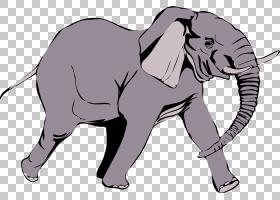 非洲大象大象白色背景PNG剪贴画哺乳动物,食肉动物,狗喜欢哺乳动