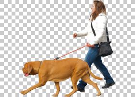 宠物坐在澳大利亚牛狗小狗澳大利亚St尾牛狗狗走路,妇女袋PNG剪贴