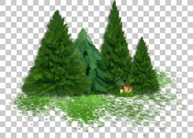 儿童新年礼物灌木PNG剪贴画杂项,叶,其他,草,新的一年,云杉,生物