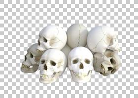 Skull Bone Skeleton脊椎动物,严重PNG剪贴画杂项,脊椎动物,头,头