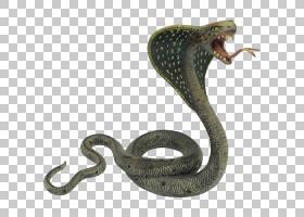 蛇王眼镜蛇印第安眼镜蛇,蛇PNG剪贴画动物,鳞片爬行动物,陆生动物