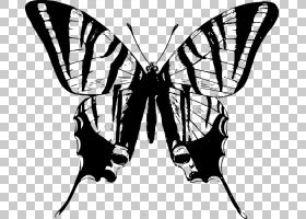铁蝴蝶T恤燕尾蝴蝶,蝴蝶边框PNG剪贴画刷脚蝴蝶,单色,对称,昆虫,