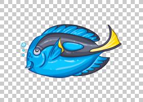 海洋哺乳动物鲸鱼海豚调色板刺尾鱼Cetacea,虎鲸PNG剪贴画海洋哺