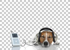 狗图库摄影小狗音乐,放松PNG clipart杂项,动物,宠物,狗喜欢哺乳图片