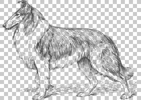 粗糙的牧羊犬边境牧羊犬光滑牧羊犬猎犬狗3d狗PNG剪贴画哺乳动物,