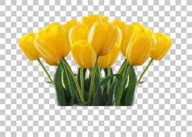 国庆郁金香花郁金香PNG剪贴画颜色,植物茎,花卉,花卉,郁金香,郁金