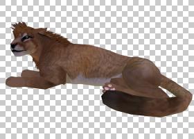 大猫美洲狮陆生动物毛皮猫PNG剪贴画哺乳动物,猫像哺乳动物,动物,
