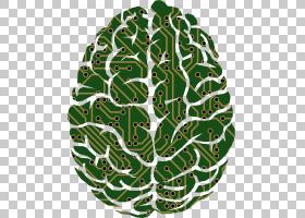 大脑神经科学人工智能装饰图案大脑PNG剪贴画叶,人民,宏,光遗传学