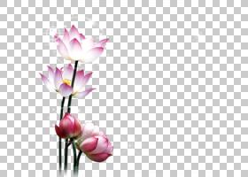 中秋节卡通,花卉,插花,切花,郁金香,花卉设计,花瓣,开花,人造花,