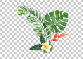 棕榈树绘图,植物茎,棕榈树,树,花盆,槟榔,叶,花,热带雨林,瑞士奶