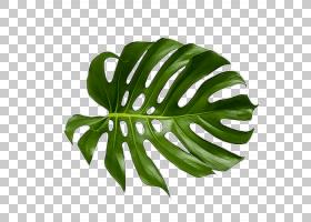 棕榈树绘图,绘图,阔叶树,棕榈叶手稿,丛林,肉质植物,香蕉叶,绘画,