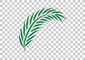 棕榈树绘图,羽毛,草,线路,模式,绿色,树,文本,叶,字体,植物,Adobe