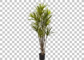 棕榈树背景,植物茎,棕榈树,槟榔,常绿,龙血树,丝绸植物,干线,花,