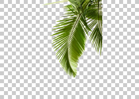 棕榈树背景,线路,分支,棕榈树,槟榔,椰子,植物,水彩画,颜色,绿色,